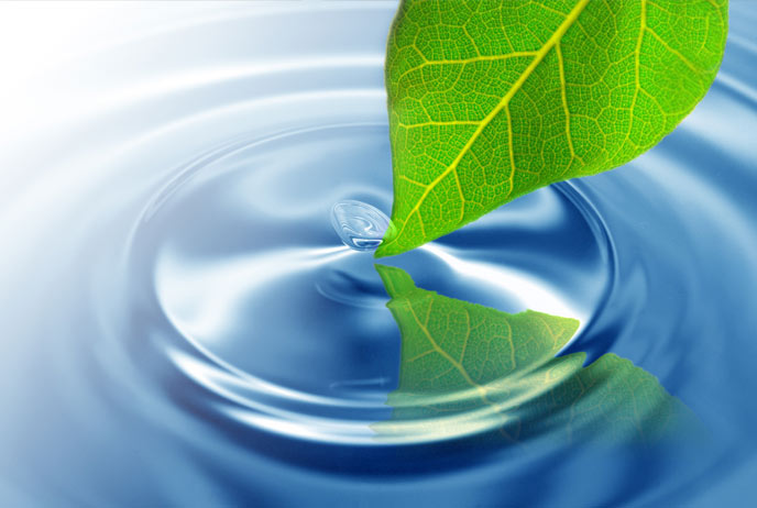 Image of leaf and water